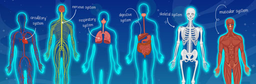 Amazing body systems