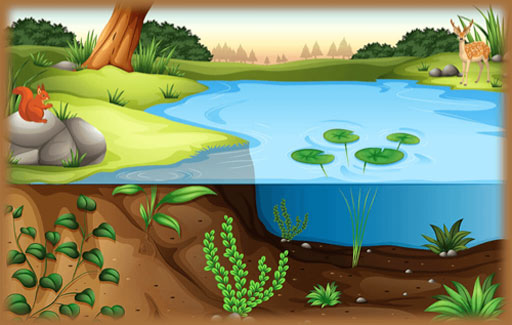 Infer the environmental conditions needed for known organisms and Match these organisms to specific habitats, based on information of the abiotic factors in these habitats.