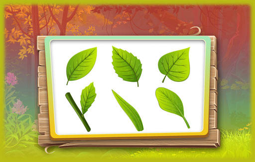 Compare the pictures of two or more leaves to note the similarities / differences in their anatomy, shapes etc.