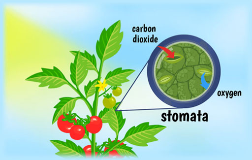 State the characteristics of photosynthesis.