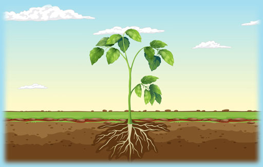 Apply knowledge of carbon dioxide metabolism by plants under light or dark conditions, and the methods that permit, reduce or prevent light from reaching green leaves to Predict the relative levels of carbon dioxide in different experiments involving plants/leaves in the presence or absence of light.