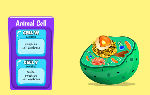 Compare and contrast 2 or more cells based on a table indicating the presence or absence of different cell parts, to infer if the cell is an animal or plant cell.