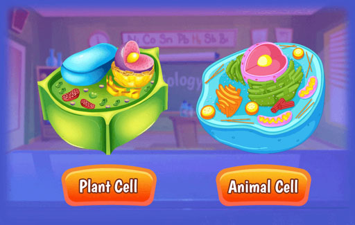 Apply knowledge of structural differences between plant and animal cells to Infer, from diagrams of unknown cells, if each cell is a plant or an animal cell and the nature of these cells.