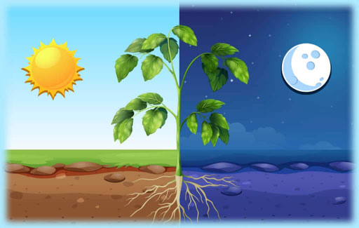 Identify the gases that are exchanged in plants in the dark.