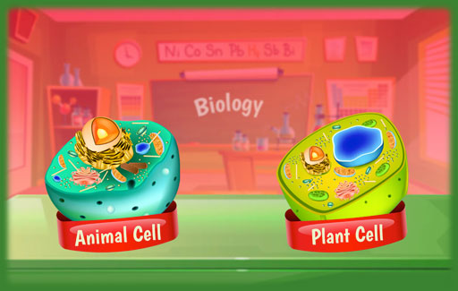 Apply knowledge of structural differences between plant and animal cells to Infer, from diagrams of unknown cells, if each cell is a plant or an animal cell and the identity of a highlighted part of the cells.