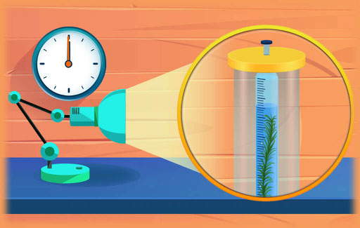 Apply knowledge of the process of photosynthesis and concepts surrounding the behaviour of liquids with air in an enclosed environment to Infer, from experimental results involving aquatic plants in light conditions, and Explain any changes in water level associated with this process in the experimental setup.