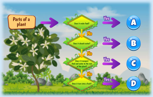 Identify different plant parts, using a dichotomous key-like flowchart that separates plant parts based on their functions.