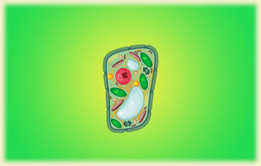 Identify on a picture of a plant cell the functions of the highlighted parts of a plant cell (names of structures not required).
