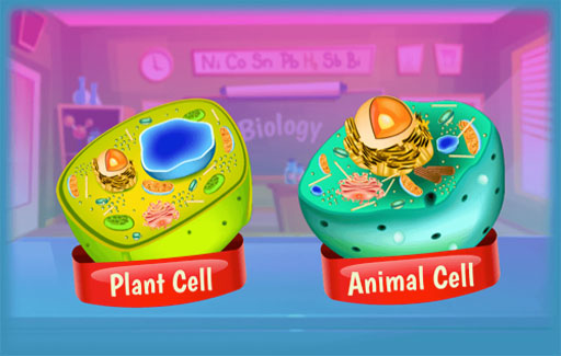 Identify on a diagram of an unknown cell, the cell parts, functions and in which type of cells (plant or animal) where they are found.