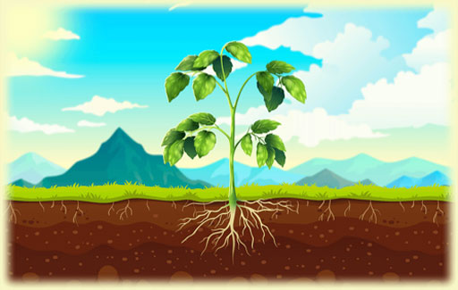 Apply knowledge of test for starch on leaves to demonstrate photosynthesis has occurred and the role of carbon dioxide in photosynthesis to Predict the result of a test for starch on leaves of plants that are subject to an environment free of carbon dioxide in the presence of light.