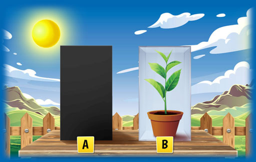Represent graphically relative levels of oxygen/carbon dioxide in environments with only plants in the presence and/or absence of light OR through a 24-hour period.