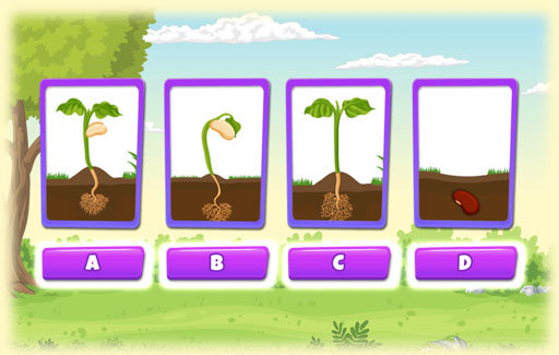 Recognize and identify the picture of the stage of plant growth where the plant starts to make its own food.