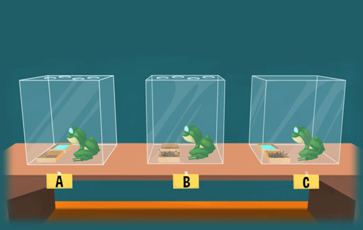 Based on experimental setups, give reasons why living organisms would die / survive under limited food, water and air condition