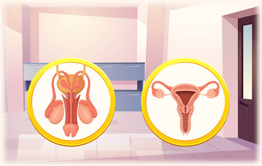Use a chart or dichotomous key to separate the parts of a human reproductive system according to their characteristics.