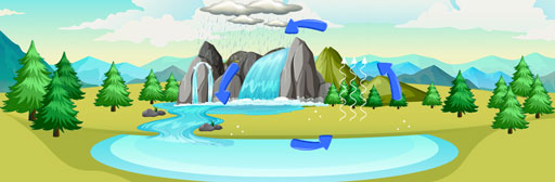 Cycles in Matter & Water Cycle