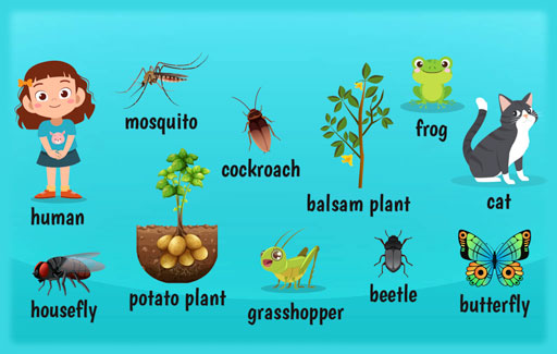 Recognise the correct generic life cycles of plants, insects, amphibians, birds, mammals