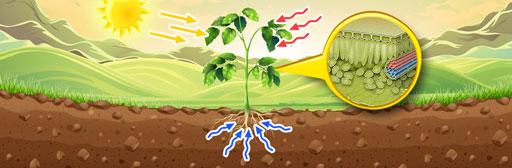 Plant System, Respiratory and Circulatory